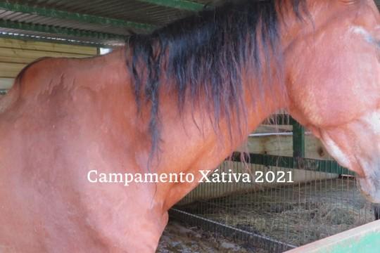 Campamento Xátiva 2021 - MyAlbum