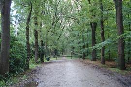 Foto's van Bos uit Etten-Leur - westerborkpad Hoogeveen - Wijster