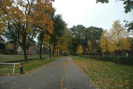 Foto's van Bos uit Oosterwolde FR - Zomaar wat herfsttinten 2012