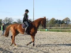 Foto's van Paard uit Hoevelaken