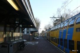 Foto's van Bos uit Den Dolder - Den Dolder