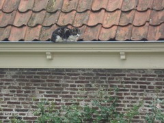 Foto's van Sport uit Monnickendam - KNBLO Monnickendam 31-05-2008