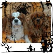 Foto's van Feesten - Happy Halloween