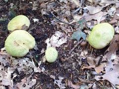 Foto's van Bos - paddenstoelen