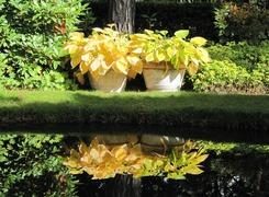 Foto's van Bos uit Maarheeze - Tuin in het Bos / herfst 2012