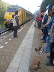 Album bekijken: 2008-10-11, Pups op het station