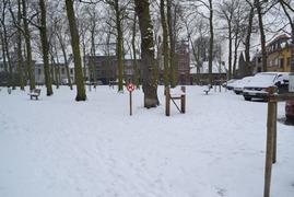Foto's van Bos - Winterwandeling 2013