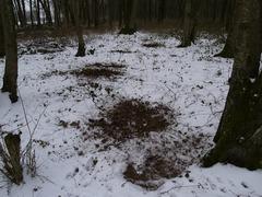 Foto's van Bos uit Goor - ree plekken - 22 februari 2013