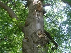 Foto's van Bos - bomen