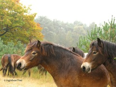 Foto's van Bos uit Oss - Herperduin - door de seizoenen heen