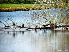 Foto's van Bos uit Dalfsen - Wandelen op landgoed Vilsteren