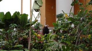 Foto's van Evenement uit Goes - Omnium orchideeënweken Goes  Dikkie