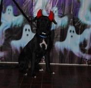 Foto's van Hond uit Pernis Rotterdam - Halloween 2008