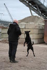 Foto's van Hond uit Hengelo OV - oudjaarsdag 2013