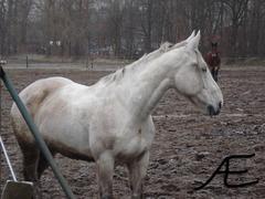 Foto's van Paard uit Loon op Zand - Paarden Wei - 03/01/09