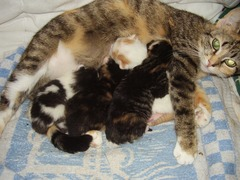 Foto's van Kat uit Tweede Exloermond - Kittens!