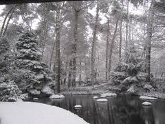 Foto's van Bos uit Maarheeze - Tuin in het Bos / winter 2012