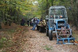 Foto's van Bos uit Ommen - Scouting Azoelen Natuur werkdag bomen kappen