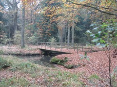 Foto's van Bos uit Maarheeze - Tuin in het Bos / directe omgeving
