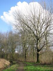 Foto's van Bos uit Nieuwegein - Populierenbos aan de Violier 21feb14