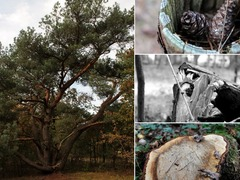 Foto's van Bos uit Hilversum - In 't bos, 26-10-'12