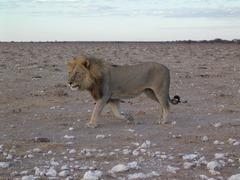 Foto's van Afrika uit Monnickendam