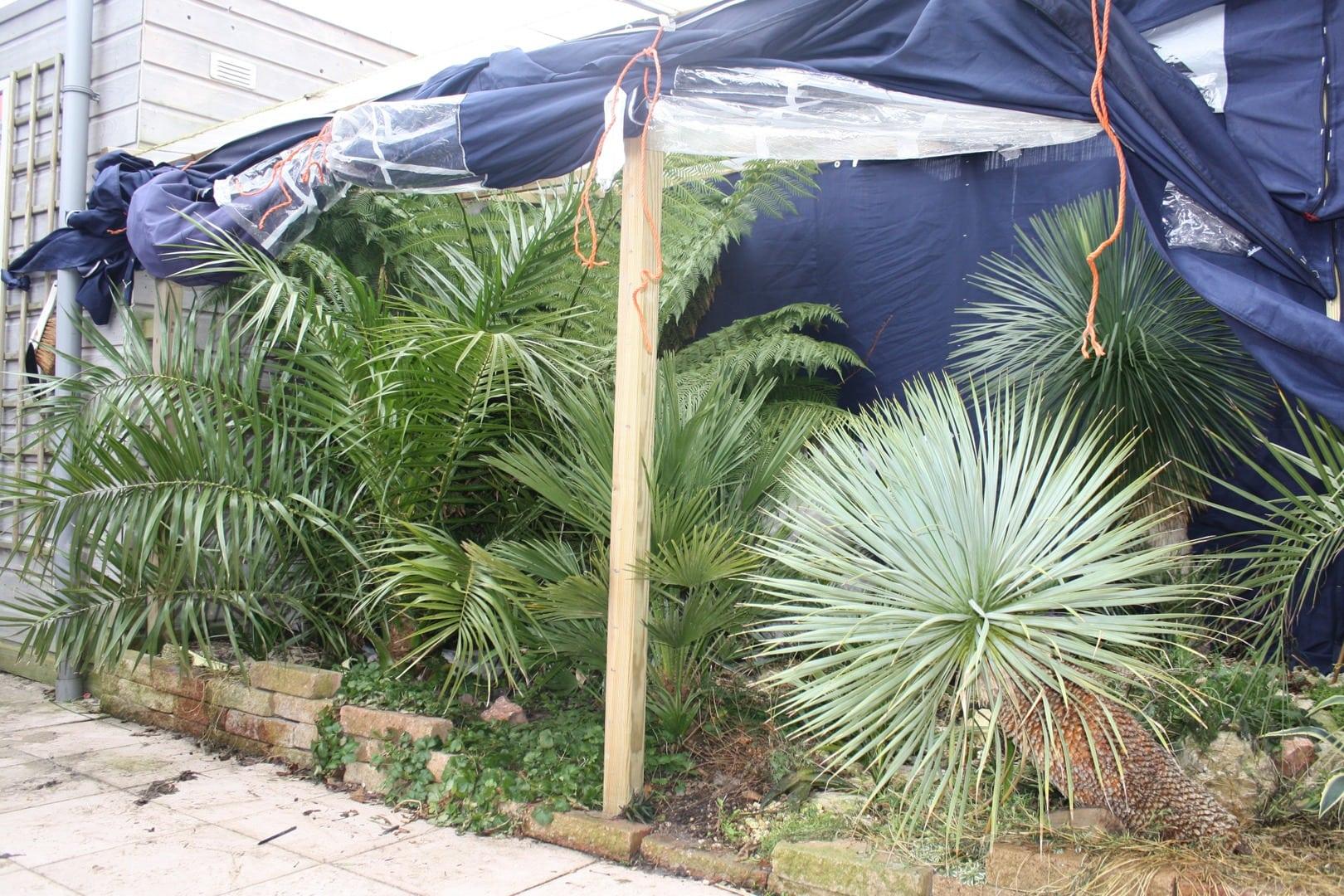 Yucca rostrata 39 s in voortuinen agave en yucca for Foto s voortuinen