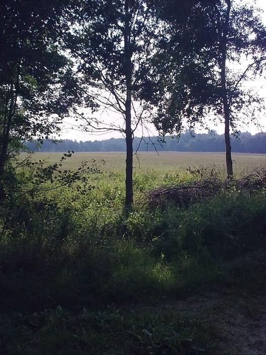 2010-08 Natuur in Heiligerlee