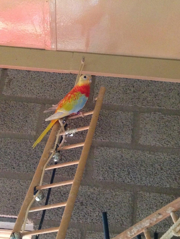 vogel als huisdier soorten