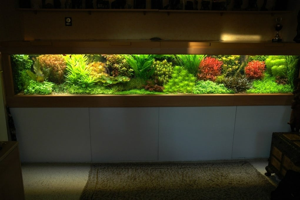 wie d ngen n hrstoffe aquascaping aquarium. Black Bedroom Furniture Sets. Home Design Ideas