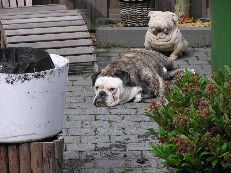 http://www.mijnalbum.nl/GroteFoto-ZIFHRKDN.jpg