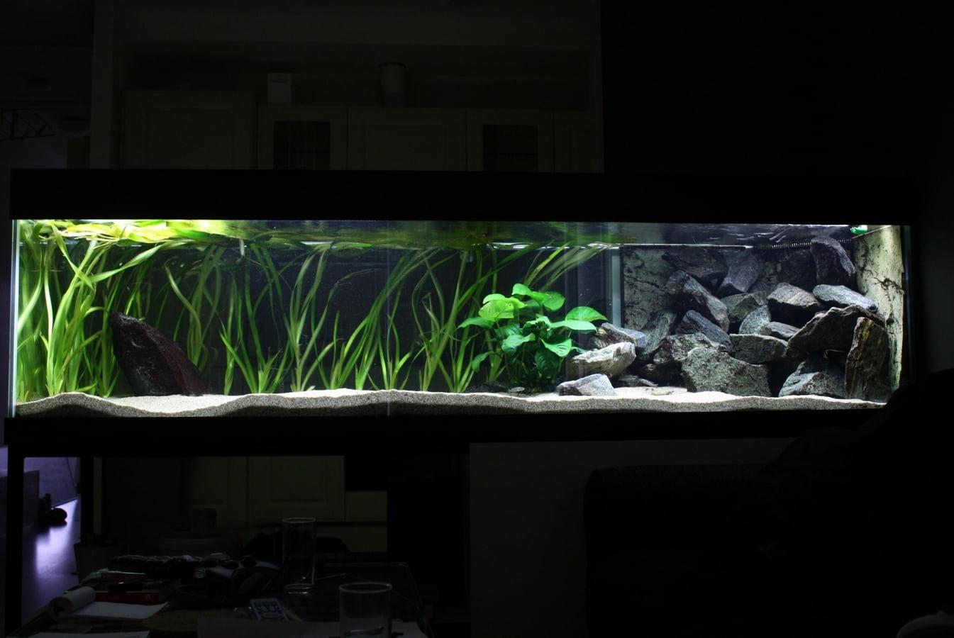 mijn 250 x 75 x 55 aquarium   Forum Tanganyika nl