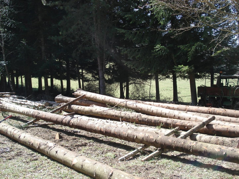 unimog mb-trac wf-trac pour utilisation forestière dans le monde - Page 4 GroteFoto-ISAETRGX