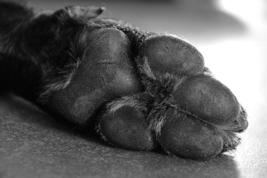 dieren fotografie annelisa den hartog