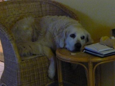 Rare gewoontes rituelen van je hond for Kattenpoep in de tuin