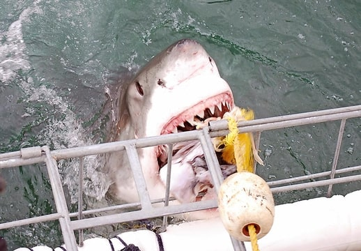 haaien ja die enge beesten bokt nl