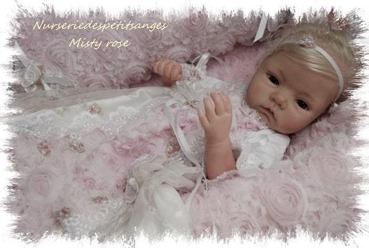 Misty rose Foto-DXK6DVFG