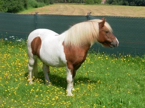 Taxatietopic Smp Deel 3 Max 2 Foto S Pony Bokt Nl