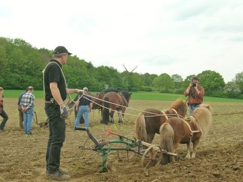 erfahrungsaustausch pfl gen mit pferden landwirtschaft mit arbeitspferden pferdekutscher forum. Black Bedroom Furniture Sets. Home Design Ideas