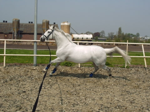Hoe houden jullie je witte andalusier lusitano wit - Hoe kleed je een witte muur ...