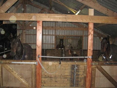 Voor diegene die een paard aan huis hebben for Paard aan huis te koop