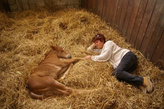 NOUVEAU CONCOURS PHOTO : la sieste à cheval ! - Page 2 Foto-WGG7F7C3