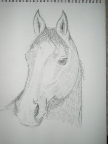 Paardenforum Cavaletti Toon Onderwerp Tekening Tips