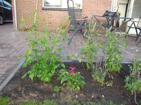 Tuintips hoe ziet jouw toekomstige tuin eruit deel 2 - Hoe dicht terras ...