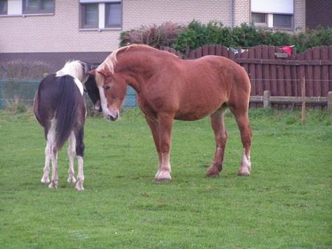 brave met paard