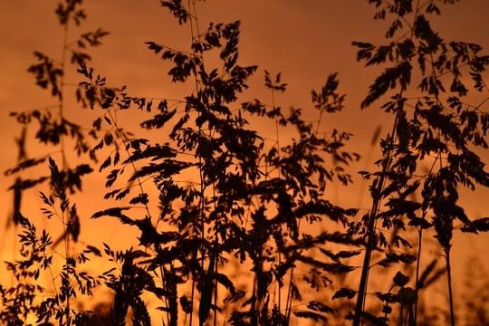 annelisa den hartog natuur fotografie zonsondergang