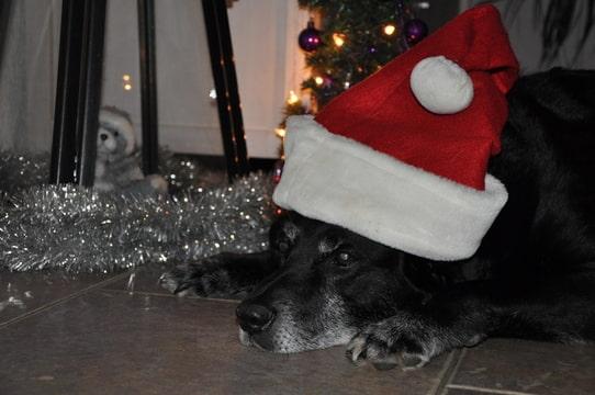 Re: De beste wensen voor 2013 !!