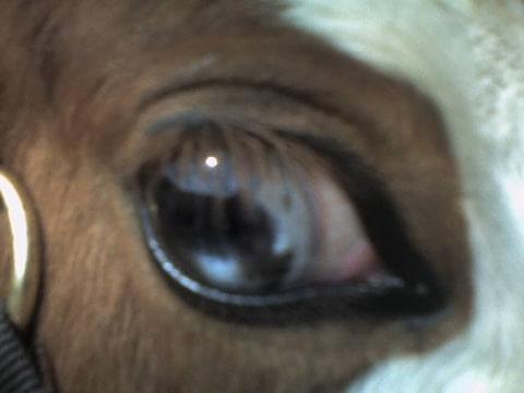 grote ogen bruine ogen