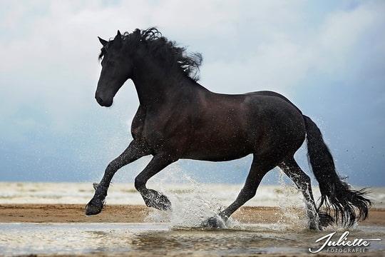 Zonsondergang Paarden Pony S Fotomeeting Strand Ijmuiden