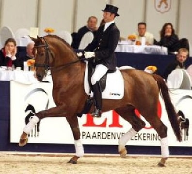 http://www.paardenfokken.nl/pedigree.php?horseid=7004: www.bokt.nl/forums/viewtopic.php?f=159&t=899360